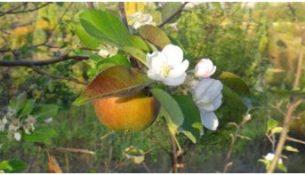 Doğanşehir 'de Ağaçlar Çiçek Açtı
