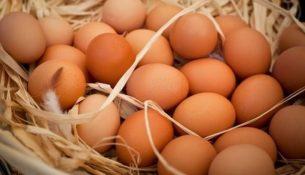 Özgür tavuk yumurtasına talep artıyor